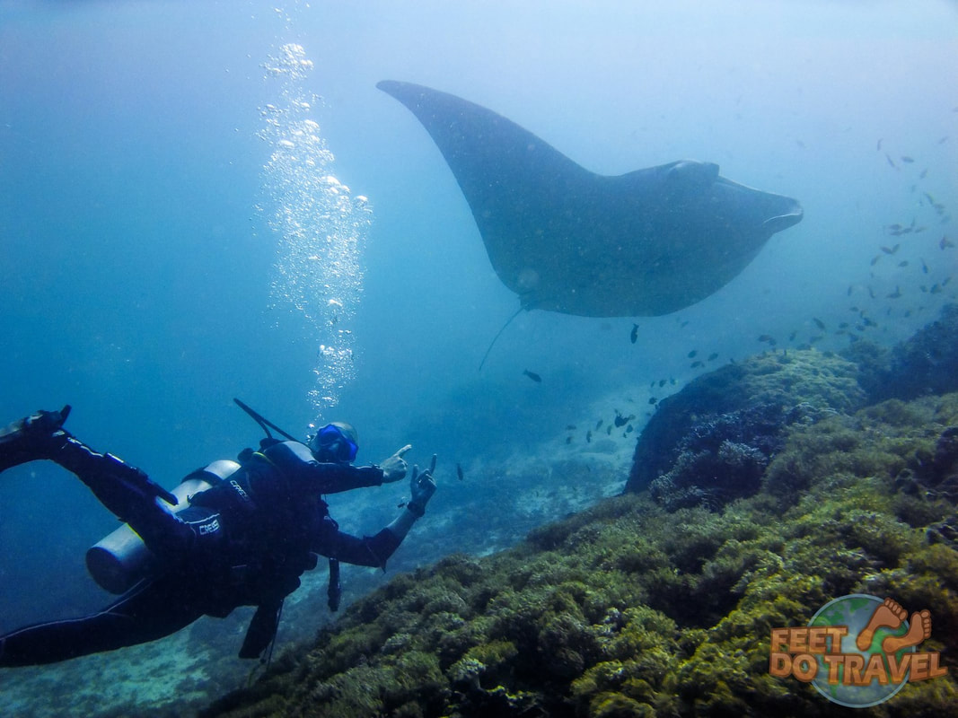 Freediving and scuba diving, benefits of learning both in Moalboal, Cebu, Philippines, should I learn freediving or scuba diving first, observe marine life, scuba, SCUBA, learn about your inner self, get your PADI, free-diving and your inner mermaid, breath-hold diving, skin diving, free diving.