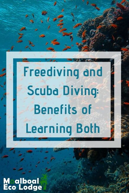 If you want to learn #diving, will you do freediving or scuba diving? Learning both will make you a better diver, and the perfect place to experience both is in #Moalboal, #Cebu, #Philippines. Moalboal Eco Lodge share the benefits of learning both freediving and scuba diving. #scuba #scubadiving #freediving #freedive #moalboalcebu #moalboalphilippines #thingstodomoalboal #itsmorefuninthephilippines #sustainabletravel #bucketlist #thingstodoincebu #budgettravel #travel #adventuretravel