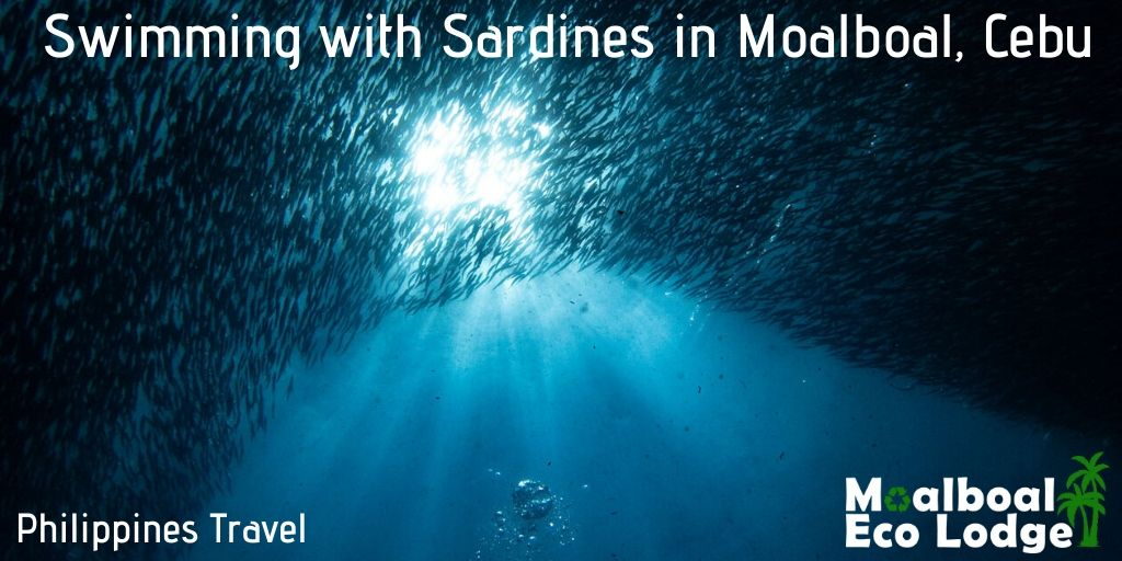Swimming with Sardines in Moalboal, Cebu, Sardine Run Philippines, best things to do in the Philippines, things to do in Moalboal, Cebu, Scuba Diving and Freediving the Philippines, snorkelling with turtles, Moalboal Eco Lodge